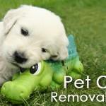 Rug Pet Odor Removal