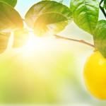 Lemon Scent Deodorizing