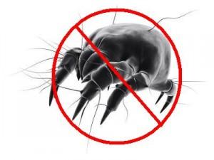 We Remove Dust Mites