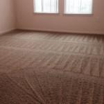 High-Rise Loft Carpet Cleaning